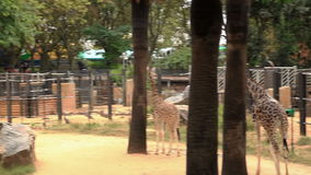 Barcelona-Zoosommer stock video footage
