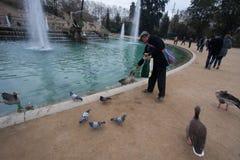 Barcelone, Parc Citadeli, mars 2016 : Les gens alimentent des canards et les pigeons dans une ville s'accumulent Photographie stock libre de droits