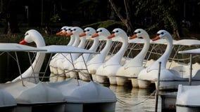 Barche del cigno sugli stagni ai parchi pubblici stock footage
