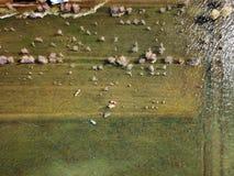 Barche del lago view dell'uccello in autunno Immagine Stock Libera da Diritti