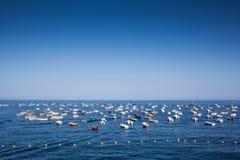 Barche di Brava della Costa Immagini Stock