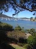 Barche di Sydney Harbour Immagine Stock