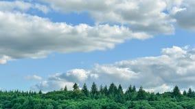 Barckground mínimo del paisaje Nubes, cielo azul y pinos imágenes de archivo libres de regalías
