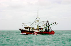 Barco atlântico do camarão fotos de stock royalty free