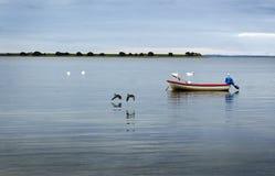Barco, cisnes e patos Imagens de Stock Royalty Free