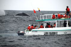 barco de Ballena-observación Foto de archivo