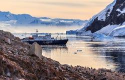 Barco de cruceros antártico entre gathere de los icebergs y de los pingüinos de Gentoo fotos de archivo libres de regalías
