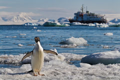 Barco de cruceros de los icebergs del pingüino, la Antártida Fotos de archivo libres de regalías