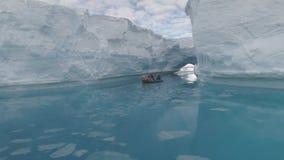 Barco de flutuação entre iceberg no oceano antarctica video estoque