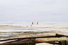 Barco de madeira no Oceano Índico fora da ilha de Zanzibar Unguja Imagem de Stock