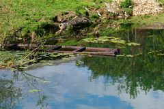 Barco de madera viejo hundido en el río del verano Fotografía de archivo