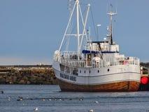 Barco de observação da baleia no porto dos andenes fotografia de stock