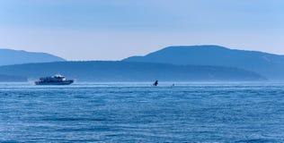 Barco de observación de la ballena cerca de una orca de salto foto de archivo