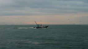 Barco de pesca com as gaivotas que voam após ele vídeos de arquivo