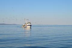 Barco de pesca seguido pelo rebanho da gaivota Imagem de Stock