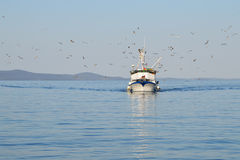 Barco de pesca seguido pelo rebanho da gaivota Fotos de Stock Royalty Free