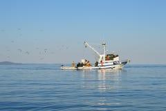 Barco de pesca seguido pelo rebanho da gaivota Foto de Stock