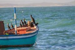 Barco de pesca y cormoranes Imagenes de archivo