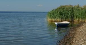 Barco de rowing en la playa metrajes