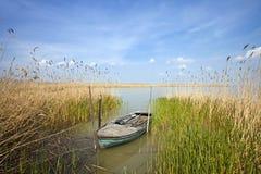 Barco de rowing viejo entre las cañas Foto de archivo libre de regalías