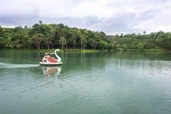 Barco del cisne en el lago Dambri Imagenes de archivo