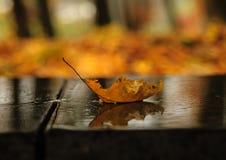 Barco del otoño Foto de archivo libre de regalías