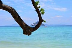 Barco detrás del tronco de árbol Imagen de archivo