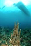 Barco do mergulho sobre o recife coral Fotos de Stock Royalty Free