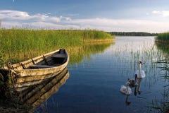 Barco e cisnes Foto de Stock Royalty Free