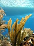 Barco e recife do mergulho Imagens de Stock