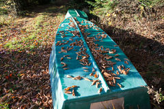 Barco en la playa en el bosque de la caída, Canadá Foto de archivo libre de regalías