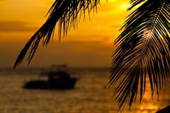 Barco en la salida del sol enmarcado por las ramas del coco Foto de archivo