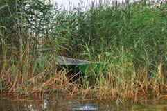 Barco en las cañas Fotografía de archivo