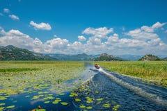 Barco a motor que flui entre as estações de tratamento de água que crescem no lago no parque nacional, Montenegro foto de stock royalty free