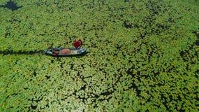 Barco nos lírios de água aéreos imagens de stock