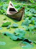 Barco que descansa em uma lagoa completamente dos lótus Foto de Stock Royalty Free