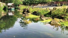 Barco que pasa lentamente cerca en el pequeño río con el musgo y el encintado verde metrajes