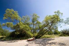 Barco sob a árvore fotografia de stock