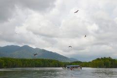 Barco turístico rodeado por una multitud de águilas rojas Eagles de alimentación, parque de Kilim Geoforest, Langkawi, Malasia foto de archivo