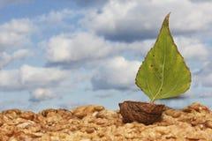 Barco verde de la nuez Imagen de archivo libre de regalías