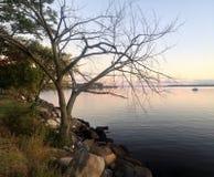 Barco y árbol Imagen de archivo libre de regalías