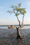 Barco y árbol de pesca Imagen de archivo libre de regalías