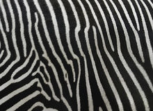 Barcode. The skin of a zebra is very similar on barcode stock photography