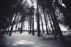 Barcode drzewa fotografia royalty free