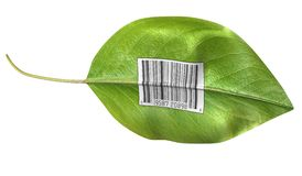 Barcode leaf. Bright green leaf with barcode on side against white background Stock Image