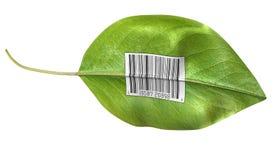 barcode liść royalty ilustracja