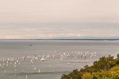 Barcolana regatta of Trieste. One of the biggest regatta in the world: the Barcolana Royalty Free Stock Photography