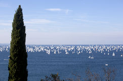 Barcolana, The Trieste regatta Royalty Free Stock Photography