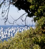 Barcolana, The Trieste regatta Stock Photo