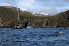 Barcos amarrados en bahía con los pájaros meridionales del petrel gigante en el agua imagen de archivo